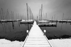 Black and white world