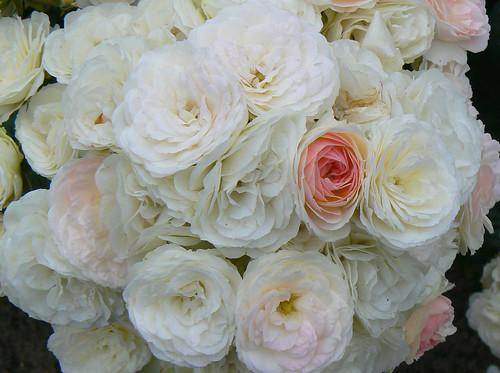 A Bouquet For Barry & Chris