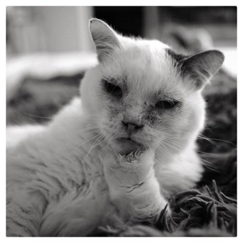 "Senior Portrait • <a style=""font-size:0.8em;"" href=""http://www.flickr.com/photos/150185675@N05/30854078573/"" target=""_blank"">View on Flickr</a>"