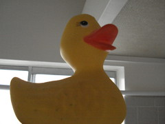 Rubber Ducky #00