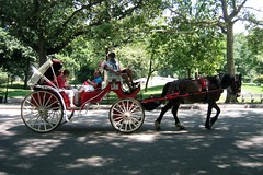 NYC - Central Park: Horse drawn carriage