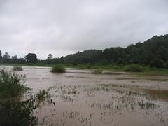 Kollibacchalu Dam -Malenadu Heavy Rain Effects Photography By Chinmaya M.Rao   (104)