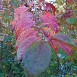 "#autumn #bush #october #awesomepicture #z5compact #Sony #xperia #rissne #sundbyberg #sbgskola #grönkullaskolan <a style=""margin-left:10px; font-size:0.8em;"" href=""http://www.flickr.com/photos/131645797@N05/21918281720/"" target=""_blank"">@flickr</a>"