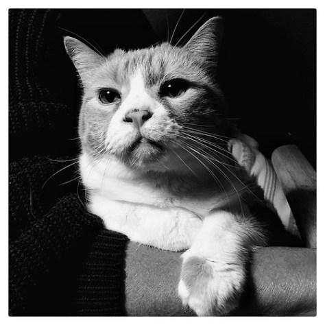 "Senior Portrait • <a style=""font-size:0.8em;"" href=""http://www.flickr.com/photos/150185675@N05/31664251675/"" target=""_blank"">View on Flickr</a>"
