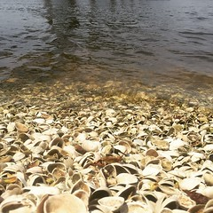 Shelly shores on Lake Charles. #theworldwalk #travel #twwphotos
