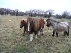 Pony toy