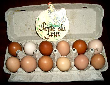 Some of today's eggs by hardworkinghippy.