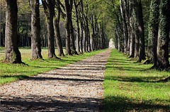 "Die Allee. Die Alleen. • <a style=""font-size:0.8em;"" href=""http://www.flickr.com/photos/42554185@N00/22623169637/"" target=""_blank"">View on Flickr</a>"