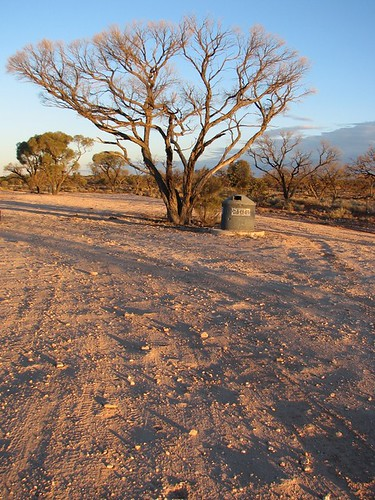 Australia, Roxby Downs: Sunset trees