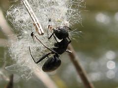 Ant study 1