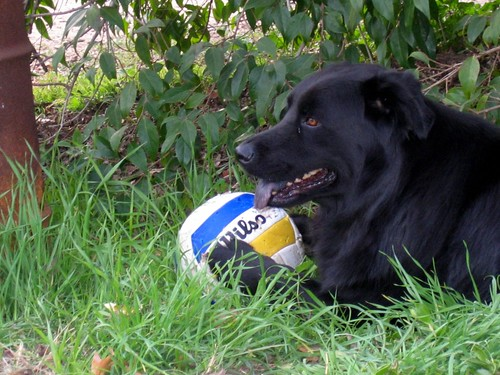 Axl playing with volleyball