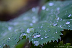 Droplets - Macro Mondays (Explored 22sep15)