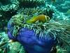 Maldives 2008 827