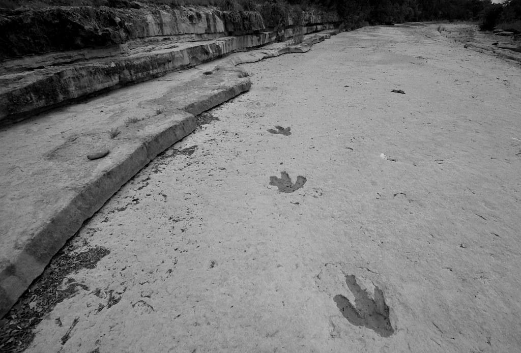 Leander Dinosaur Tracks