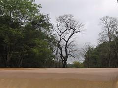 Kollibacchalu Dam -Malenadu Heavy Rain Effects Photography By Chinmaya M.Rao   (74)