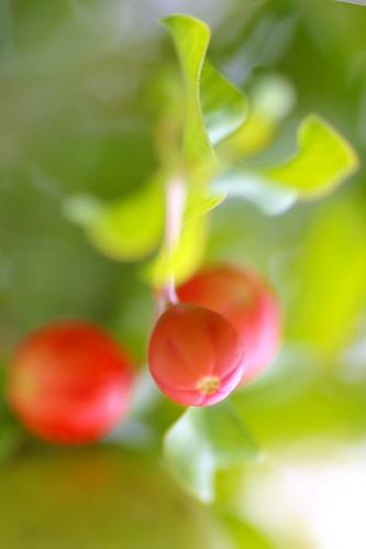 Pomegranate by kktp_.