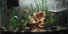 Aquarium---full