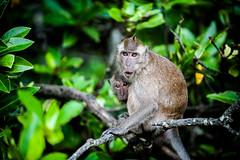 monkeys-1012
