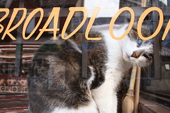 carpet store kitty