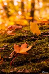 Herbst an der Saaleschleife-10