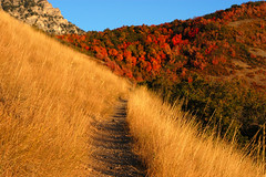 Mountain Trail in Provo Canyon