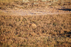 American Prairie Reserve 8