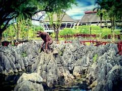 Bahagian Kuching, Sarawak https://goo.gl/maps/aYZRh8m35AH2  #travel #holiday #Asian #Malaysia #Sarawak #Kuching #travelMalaysia #holidayMalaysia #旅行 #度假 #亚洲 #马来西亚 #沙拉越 #古晋 #trip #马来西亚旅行 #traveling #马来西亚度假 #garden #rock #rockgardenbau #石头 #猴子 #monkey