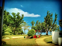 Petra Jaya, Sarawak https://goo.gl/maps/hMrUdC8nBNJ2  #travel #holiday #Asian #Malaysia #Sarawak #Kuching #travelMalaysia #holidayMalaysia #旅行 #度假 #亚洲 #马来西亚 #沙拉越 #古晋 #trip #马来西亚旅行 #traveling #马来西亚度假 #tree #grass #nature #大自然 #PetraJaya #hutan #bluesky #树木