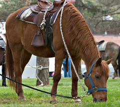 """CRW_2248: Horse • <a style=""""font-size:0.8em;"""" href=""""http://www.flickr.com/photos/54494252@N00/10155451/"""" target=""""_blank"""">View on Flickr</a>"""