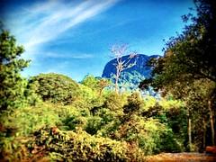 68000, Selangor https://goo.gl/maps/fMyvgjVkFut  #tree #nature #travel #holiday #trip #Asian #Malaysia #Selangor #ampang #travelMalaysia #holidayMalaysia #旅行 #度假 #亚洲 #马来西亚 #雪兰莪 #安邦 #马来西亚旅行 #马来西亚度假 #traveling #kampung #大自然 #树木 #花 #fiower #mountain #rustic