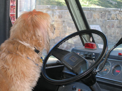 H Dota2 Keys W Picture Of A Dog Driving A Bus