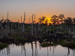228/365 - Sunset in the Florida Swamps