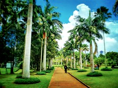 Jublee Recreation Ground, 93450 Kuching, Sarawak https://goo.gl/maps/Rt8fDEtZei52  #travel #holiday #Asian #Malaysia #Sarawak #Kuching #travelMalaysia #holidayMalaysia #旅行 #度假 #亚洲 #马来西亚 #沙拉越 #古晋 #trip #马来西亚旅行 #traveling #tree #树木 #park #garden #公园