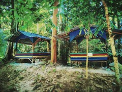 Kampung Kemensah, 68000 Ampang Jaya, Selangor https://goo.gl/maps/pRoCWPdiKxp  #tree #nature #travel #holiday #trip #Asian #Malaysia #Selangor #ampang #travelMalaysia #holidayMalaysia #旅行 #度假 #亚洲 #马来西亚 #雪兰莪 #安邦 #马来西亚旅行 #马来西亚度假 #traveling #uluKelang #大自然 #