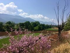 Der Frühling ist da! Weg nach Lijiang