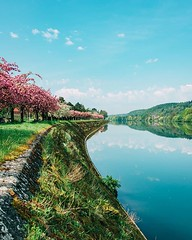 Day 743 - Cherry blossoms and glassy water. The skies have been clear lately, but it looks like rain all day tomorrow. Sav and I will put in a lot of miles today and hopefully out-walk the worst of the storm. #theworldwalk #travel #belgium