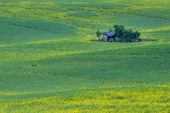 Fields of South Moravia 7
