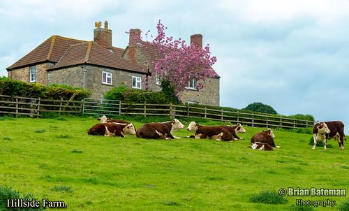 Hillside Farm.
