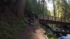 Trailabschnitt im Olympic Nationalpark