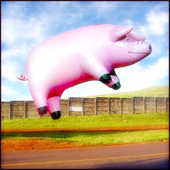 Blank Airport - Flying Pig !