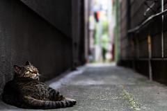 Smooth Transfer Focus Cat