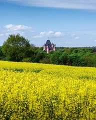 Day 750 - Things you don't see in America - yellow fields of canola rolling towards a castle in the distance. I've walked by two types of yellow fields in Europe. The one pictured at the end of Germany was mustard, it's flowers are few and high on the ste