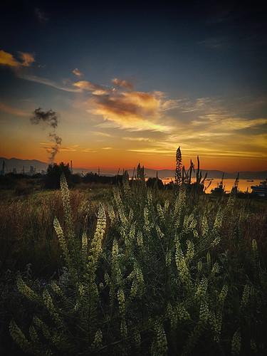 landscape samsung smartphone sunrise flowers