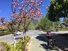 auf dem Radstreifen aus Lijiang heraus