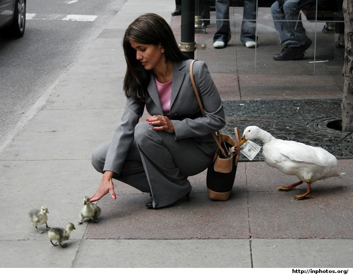 Thieving Duck