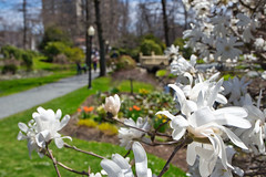 Bokeh at the Halifax Public Gardens, Halifax Nova Scotia