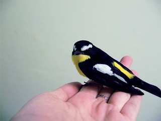 a real bird in hand
