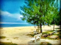 45400 Sekinchan, Selangor https://goo.gl/maps/J3pRFLMmnon  #travel #holiday #traveling #trip #Asian #Malaysia #旅行 #度假 #亚洲 #马来西亚 #วันหยุด #การเดินทาง #ホリデー #휴일 #여행 #Sekinchan #Selangor #outdoor #海滩 #beach #pantai #tree #Touristattractions #праздник #путеше