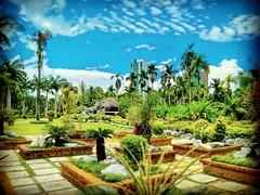 Jublee Recreation Ground, 93450 Kuching, Sarawak https://goo.gl/maps/ZFBbLmVcL3A2  #travel #holiday #Asian #Malaysia #Sarawak #Kuching #travelMalaysia #holidayMalaysia #旅行 #度假 #亚洲 #马来西亚 #沙拉越 #古晋 #trip #马来西亚旅行 #traveling #Park #Taman #garden #tree #grass #