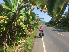Bananenplantagen